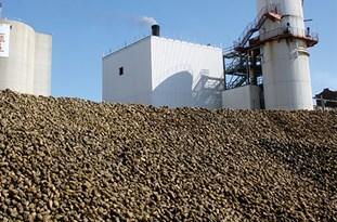 سهم شوشیها از کارخانه قند تنها دود نیست/نگرانی از استخدام و عقد قرارداد کشاورزی با غیربومیها