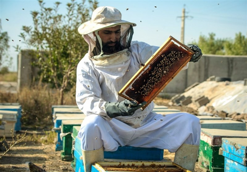 سیر تا پیاز تولید عسل/با زنبورداری میلیونر شوید
