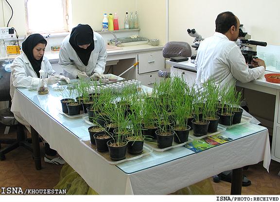 نرخ بیکاری فارغالتحصیلان کشاورزی در خوزستان بالا و نگرانکننده است