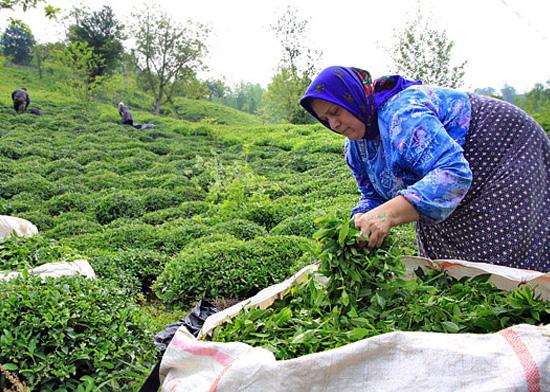 تخصیص ۱.۵ میلیارددلاربرای اشتغال روستاییان و ایجاد یک میلیون شغل تا پایان برنامه ششم توسعه